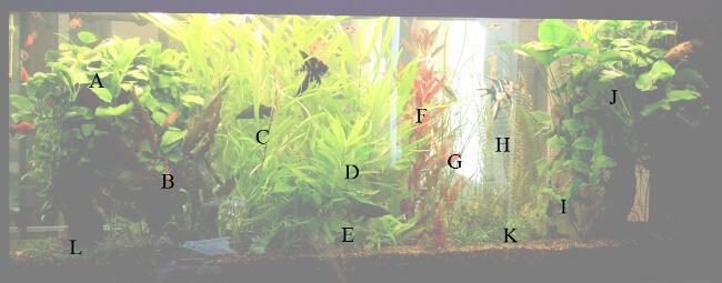 План-схема посадки растений в