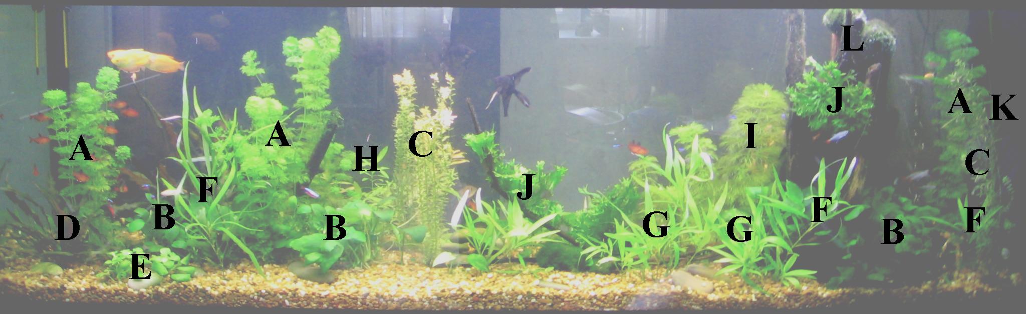 Можно ли сажать аквариумные растения в обычную землю универсальную 81