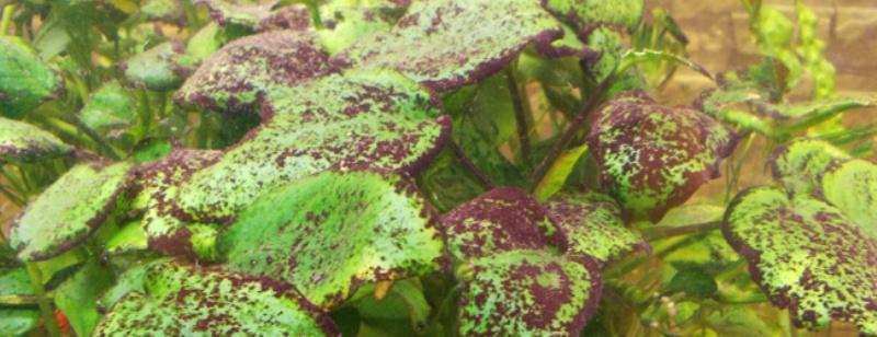 Черные водоросли в аквариуме как бороться