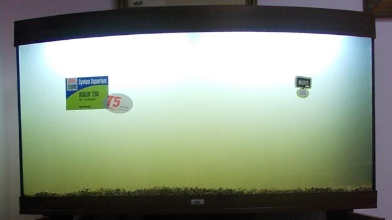 Вода в аквариуме белая